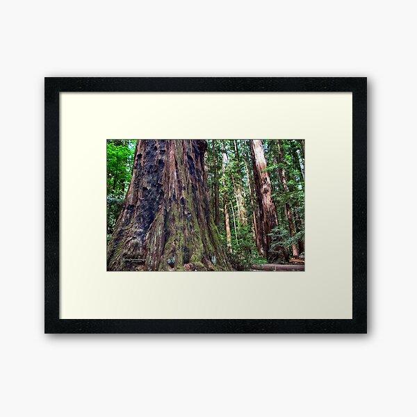Henry Cowell - Redwoods Framed Art Print