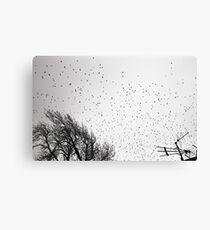 Starlings in B&W Canvas Print