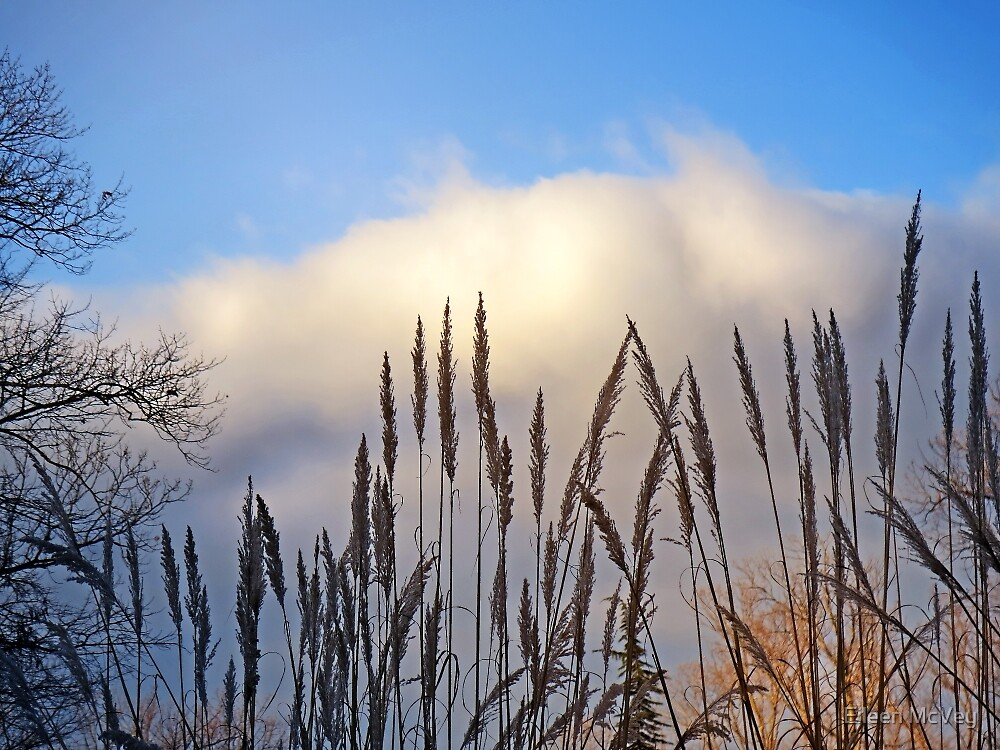 Grasses Against the Sky by Eileen McVey