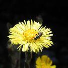Spring Visitors by Martha Medford