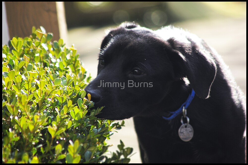 Puppy by Jimmy Burns