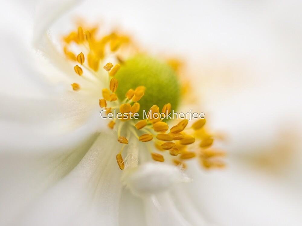 Anemone dreams by Celeste Mookherjee