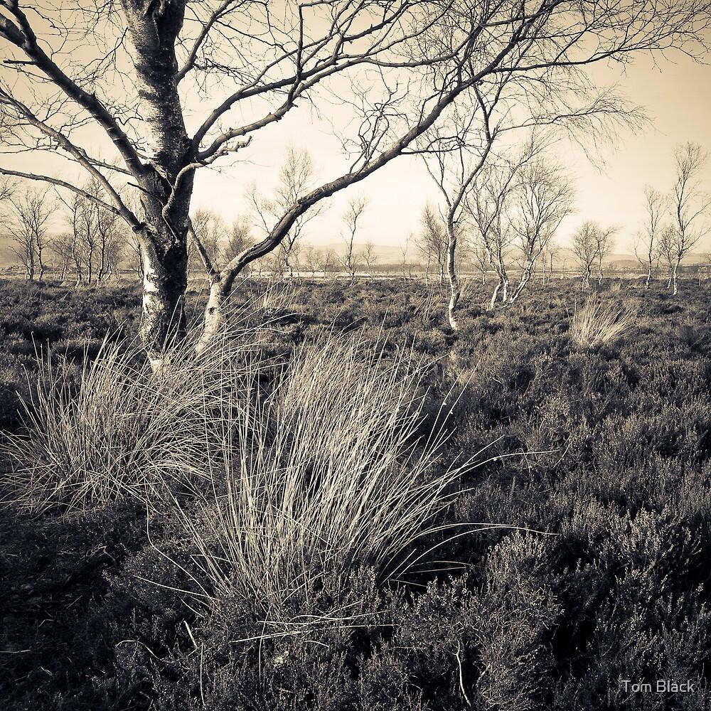 Austere II by Tom Black