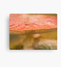 Fungi details Canvas Print