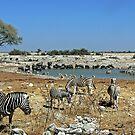 Animal Diversity at Okaukeujo Lagoon by Graeme  Hyde