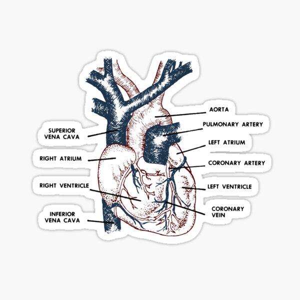 Cardio in Farbe Sticker
