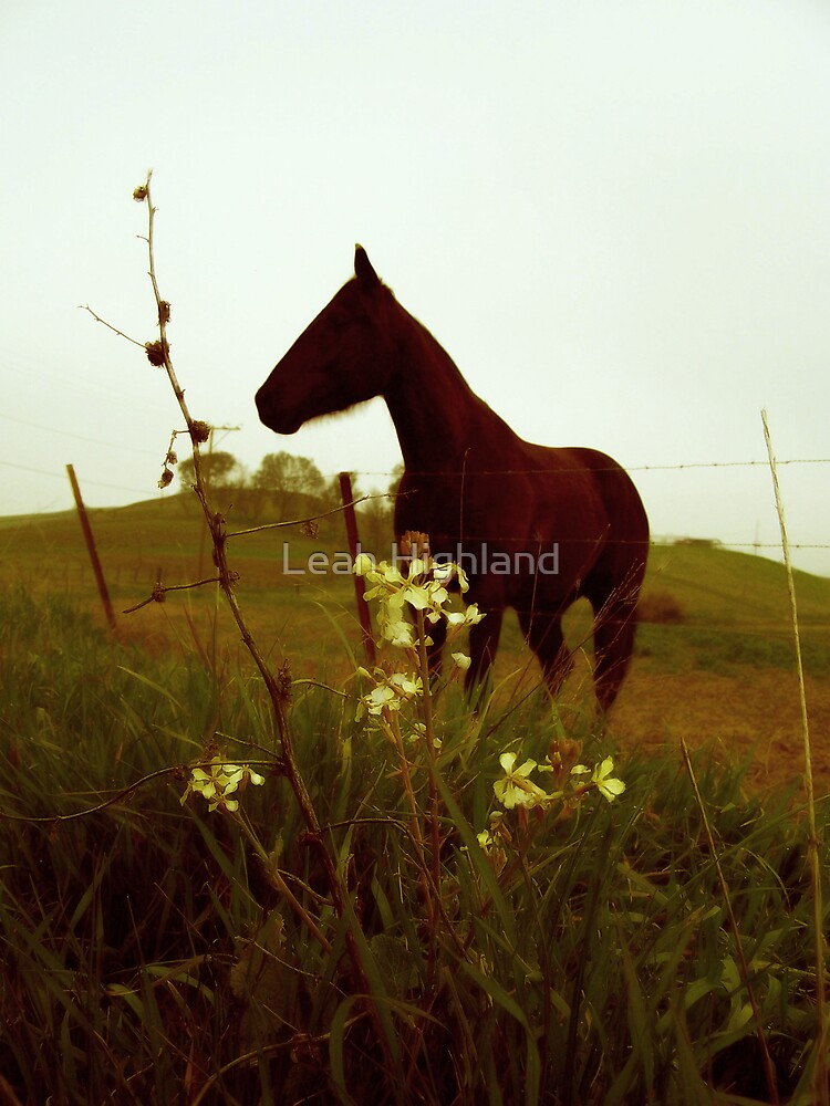 Field Of Dreams by Leah Highland