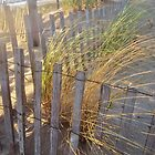Golden Grass by RVogler