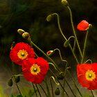 Yang Poppies by LudaNayvelt