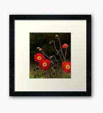 Yang Poppies Framed Print