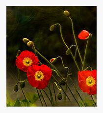 Yang Poppies Photographic Print