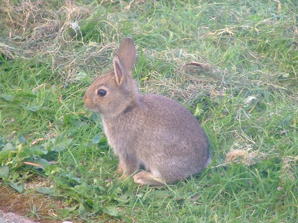 Baby Irish rabbit by Mark  O'Mahony