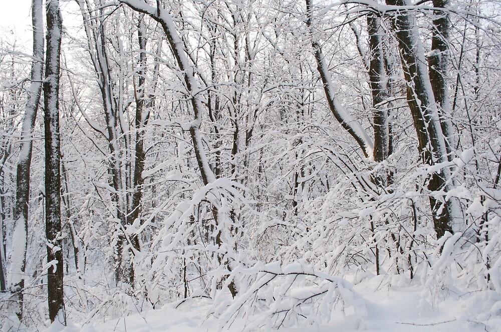 December by mariancik