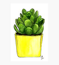 Succulent in a Yellow Pot Photographic Print