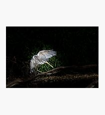Dancing Yellow-Billed Spoonbill Photographic Print