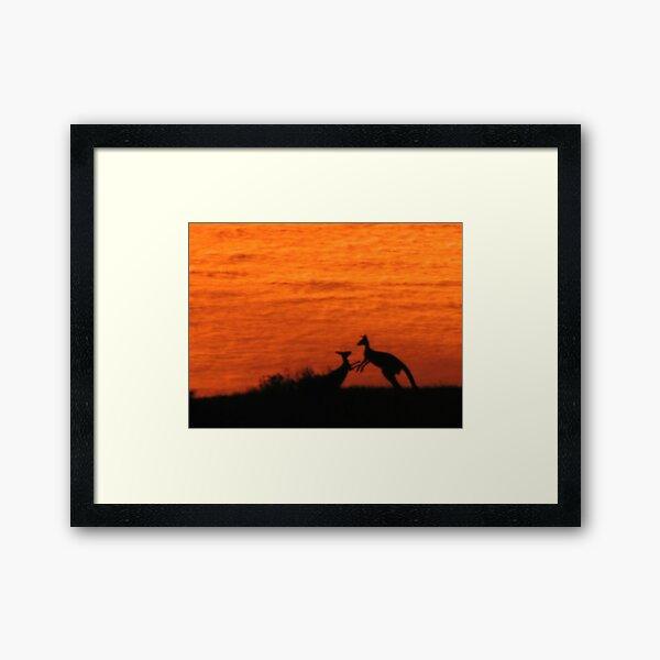 Roo'd Awakening 1 Framed Art Print