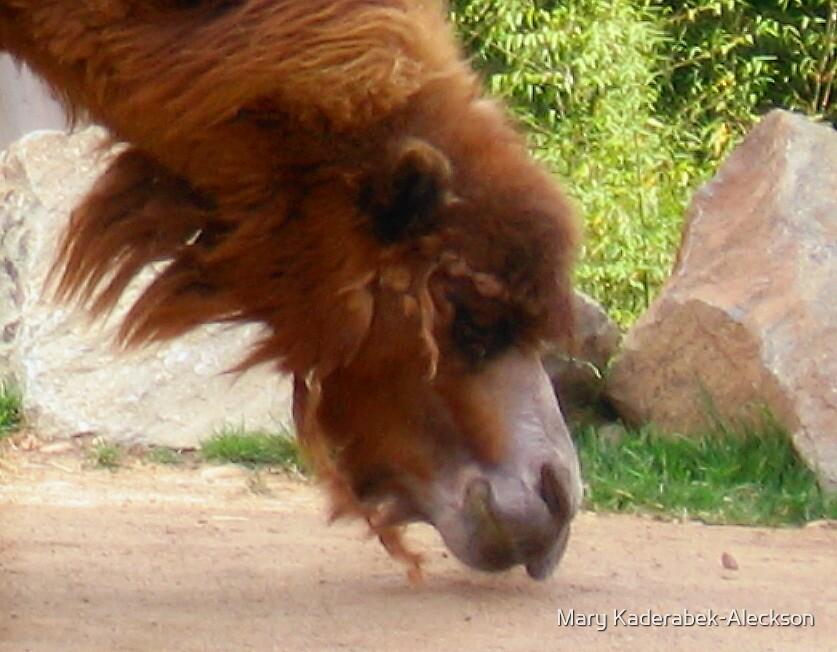 Camel by Mary Kaderabek-Aleckson