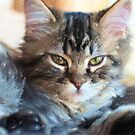 Kitty Cat--mixed media painting by Vintage Works