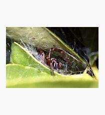 Spider's lair Photographic Print