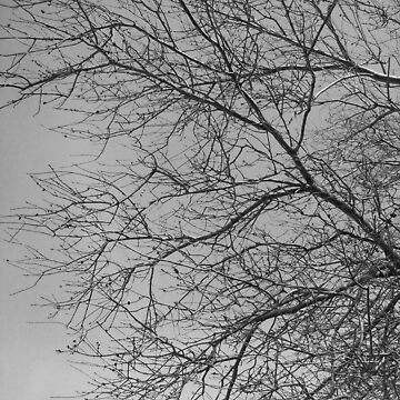 Branches by jennictat