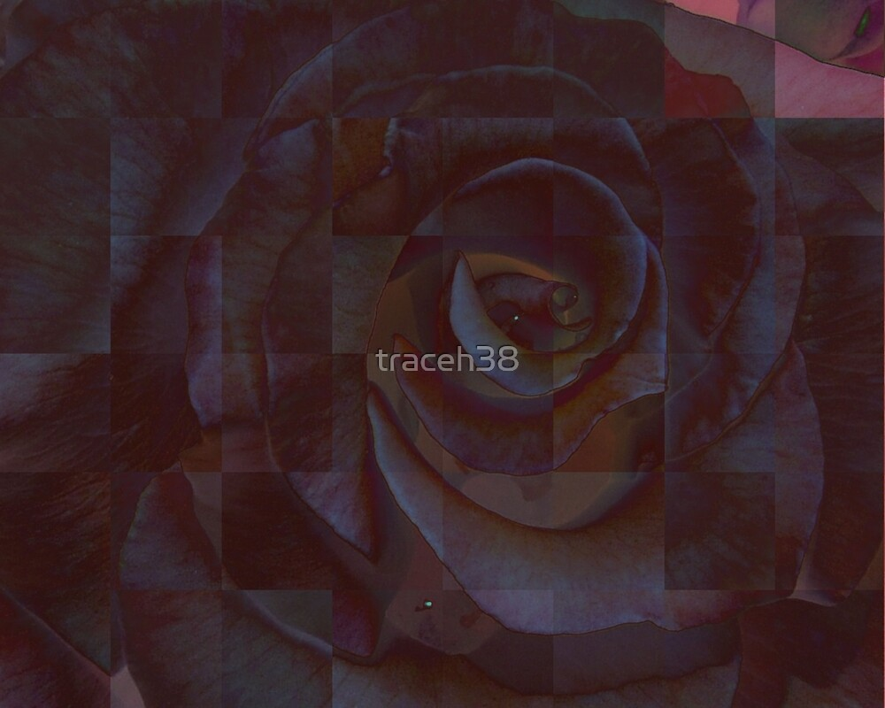 Black Rose by traceh38