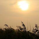 Morning Sun by patjila
