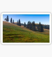 spruce trees on a grassy hill in morning light Sticker