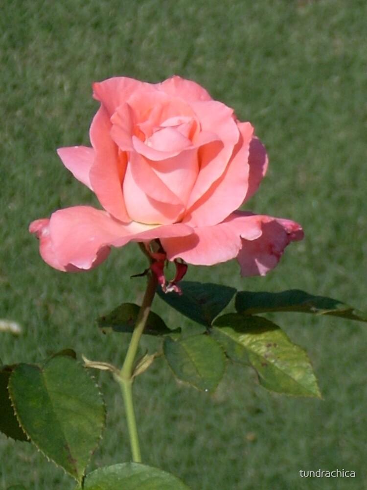 Princess Rose by tundrachica