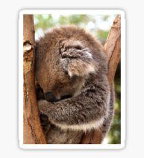 Sleeping Koala Sticker