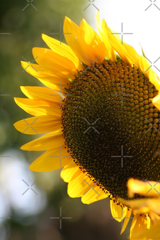 Sunflower at twilight by JHP Unique and Beautiful Images