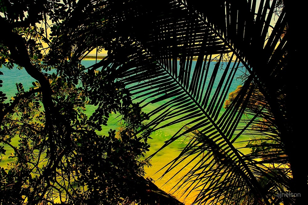 tropical splash  by ajnelson