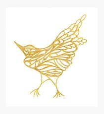 Golden Canary Photographic Print