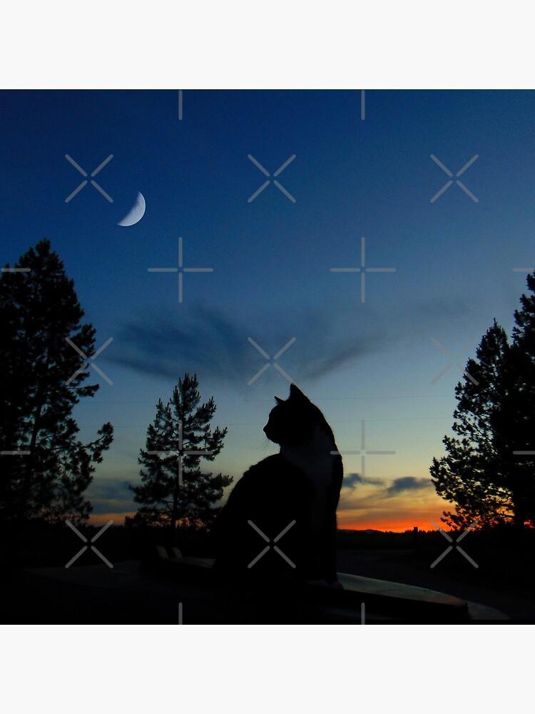 Krieger Katzen - Silhouette von TheLostHope
