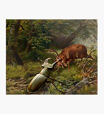 Stag Fight  Photographic Print