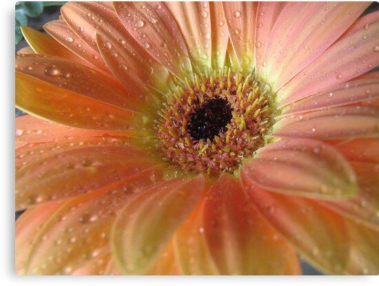 Passionate Peach by Kathie Nichols