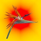 Yellow Red Bird of Paradise  by JayVee