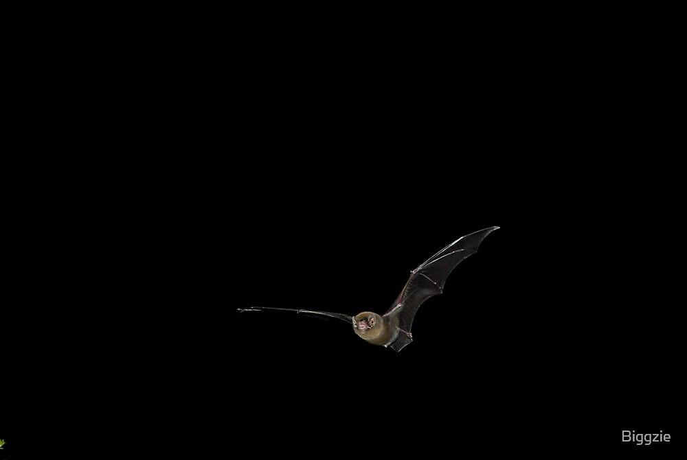 Bentwing Bat in Flight by Biggzie