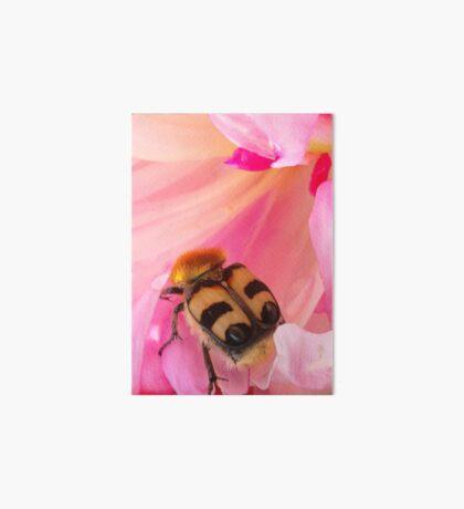 Bee Beetle Art Board