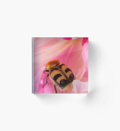 Bee Beetle Acrylic Block