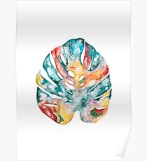 Colourful Cheese Plant Leaf - Botanical Poster