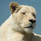 white lioness by nakomis