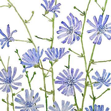 purple chicory watercolor  by ColorandColor