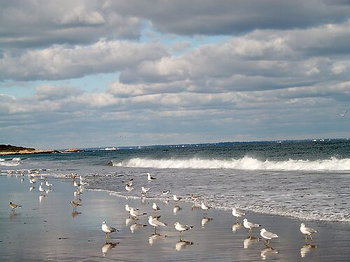seagulls by dcello