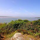 Clifftop at Gwynedd, North Wales by trish725
