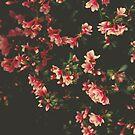 azalea flowers by Ingrid Beddoes