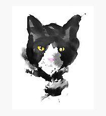 sumi cat Photographic Print