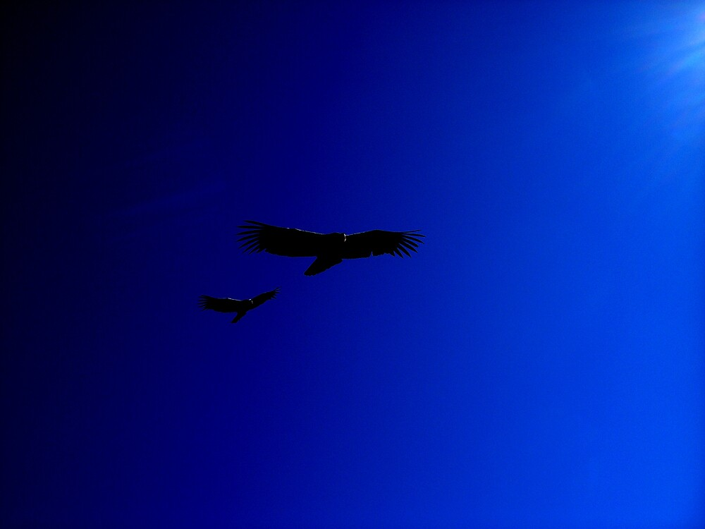 Condor by Glenn Browning