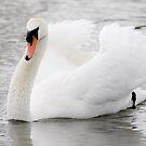 Swan Lake by carlyhodges