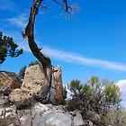 Lonesome Pine - Grand Canyon by John Schneider