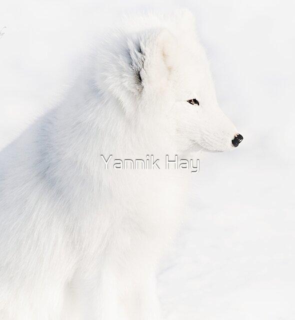 Mr White - Arctic Fox by Yannik Hay